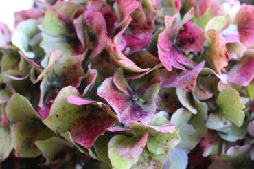 Herbstzeit – blumiges und farbenfrohes dekorieren!